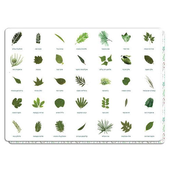 פלייסמט סוגי עלים | דרך נפלאה להכיר את העצים והעלים בארצנו, , large image number null
