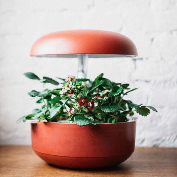 גינה חכמה PLANTUI אדום  לגידול ביתי של צמחי מאכל, עשבי תיבול, נבטים, חליטות.....אפילו עגבניות שרי  | ערכת 3 קפסולות לגינה חכמה במתנה לרוכשים, , large image number null