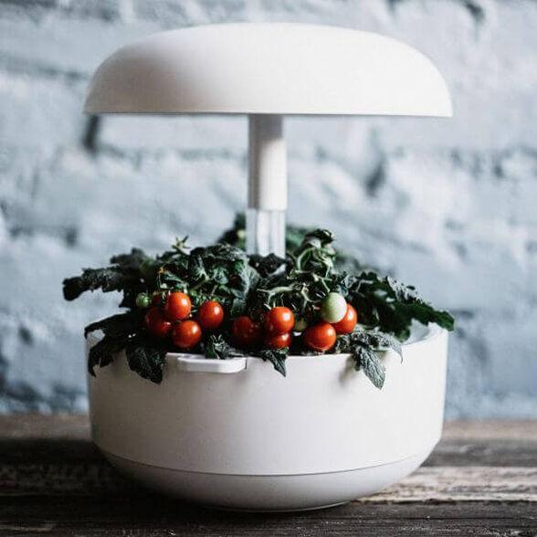 גינה חכמה PLANTUI לבן  לגידול ביתי של צמחי מאכל, עשבי תיבול, נבטים, חליטות.....אפילו עגבניות שרי | ערכת 3 קפסולות לגינה חכמה במתנה לרוכשים, , large image number null