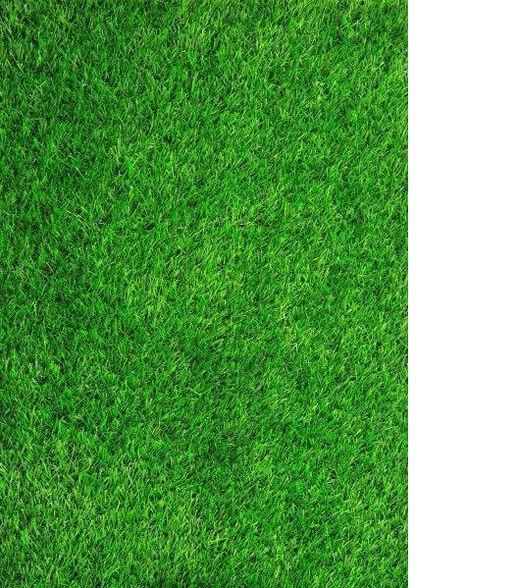 """דשא ארנה גוון ירוק מוצר פרמיום   הדשא נמכר כגליל, בגליל ישנם 6 מ""""ר (2*3) בלבד, , large image number null"""