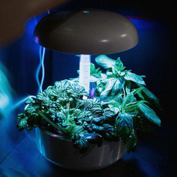 גינה חכמה PLANTUI אפור לגידול ביתי של צמחי מאכל, עשבי תיבול, נבטים, חליטות.....אפילו עגבניות שרי  | ערכת 3 קפסולות לגינה חכמה במתנה לרוכשים, , large image number null