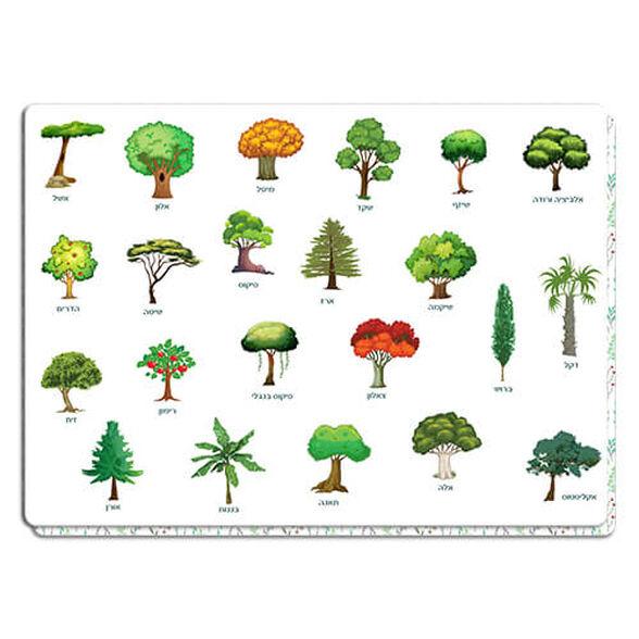 פלייסמט עצים מאויירים | מעוצב דו צדדי דרך נפלאה ללמוד על עצי ארץ ישראל, , large image number null